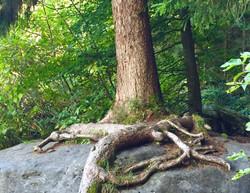 Aquila Camenzind Tree of Life