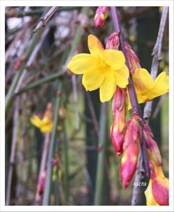 Aquila Camenzind_sacra rosegarden