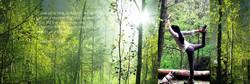 Aquila Camenzind l Yoga im Wald