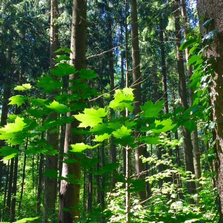 Entdecke die Kraft der Bäume