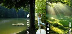 Aquila Camenzind l Baum Yoga