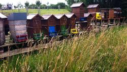 Bienen Haus