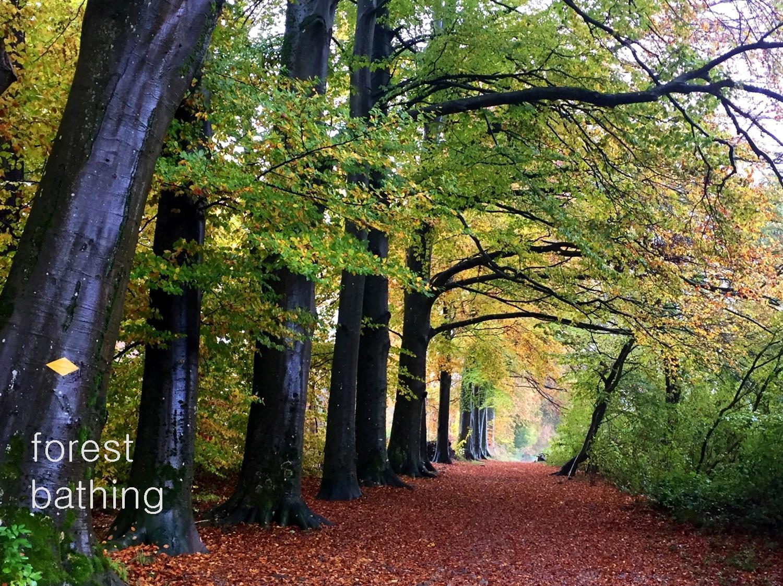 Aquila Camenzind - Yoga im Wald
