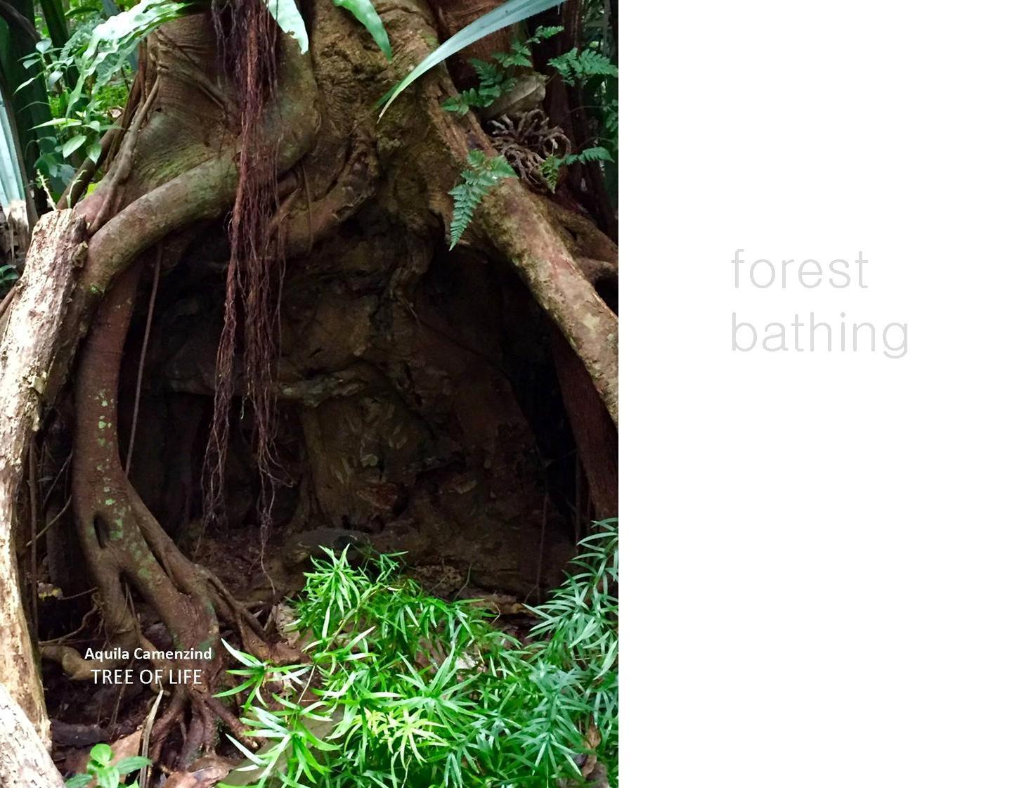 Yoga und Atmung im Wald