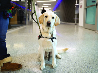 Dogs In A Cats' World: Service Animals At UK