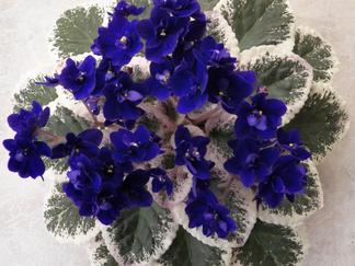 Autumn Oak Lane: African Violets 101