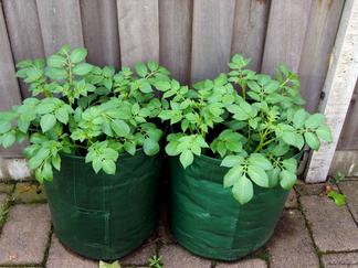 Autumn Oak Lane: Why to container garden