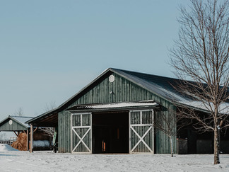 Behind the Stables: A Season of Breeding at Candy Meadows