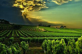 La Salette vignoble-5957-800-600-90.jpg