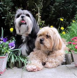 Lilly und Amy