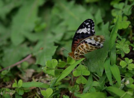 飛べない蝶々