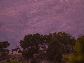 Anadolu'da geyik kültü