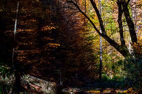 Orman ışığı No.1 - 2020