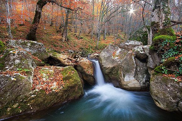 Sonbaharda bir orman manzarası