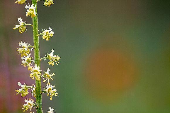 Japon güneşinde çiçekler