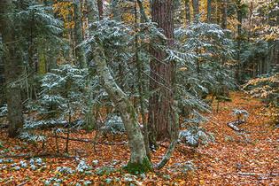 İlk kar ve orman - 2020