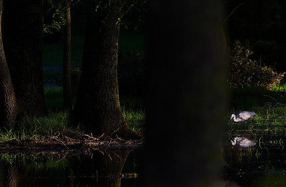 Yüzen ormanın perisi