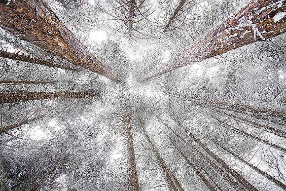 Orman çatısı
