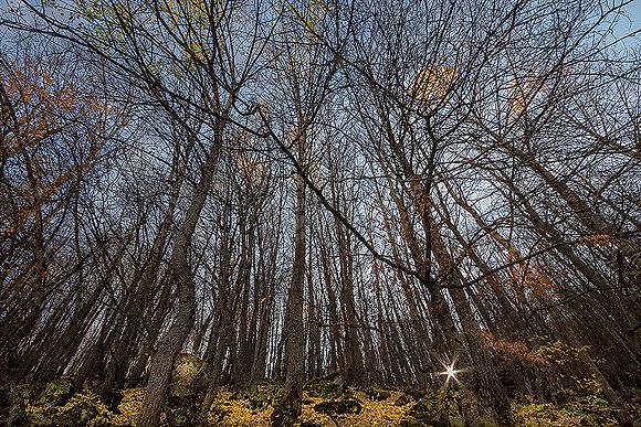 Ormanda gün dönerken
