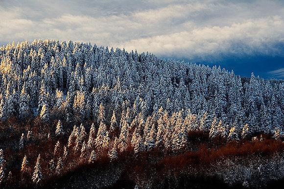 Kardan örtü