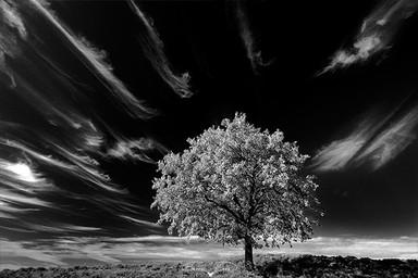 Siyah Beyaz #35 - 2013