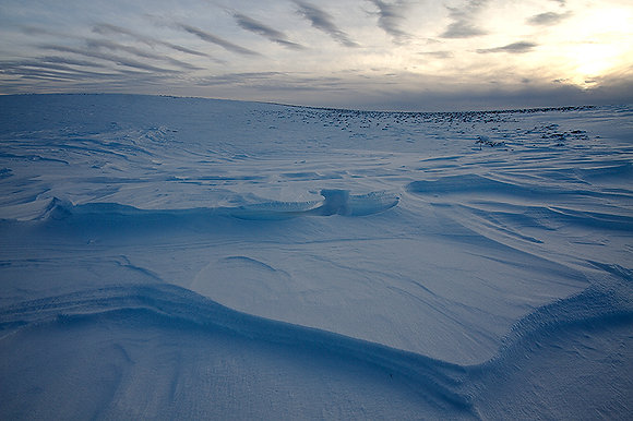 Buz örtüsü