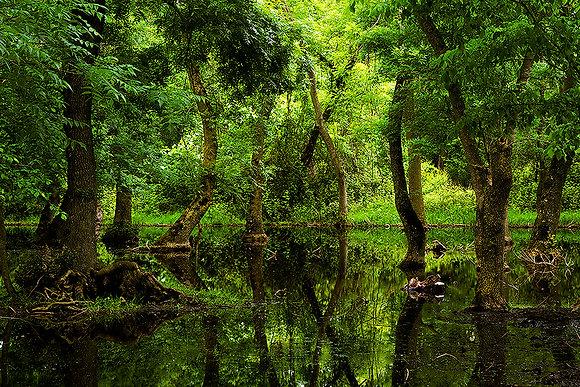 Yüzen orman