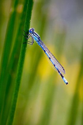Kız böceğinin mikro dünyası