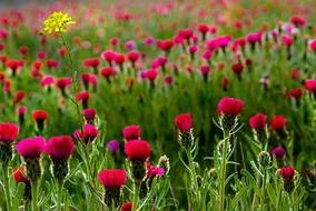 Sevgi çiçekleri - 2020