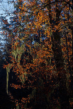 Işıkla çizilen ağaç