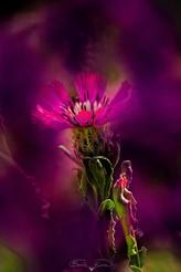 Sevgi çiçeği - 2021