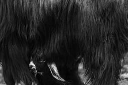 Siyah Beyaz #16 - 2014