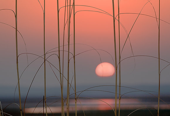 Deltada günbatımı
