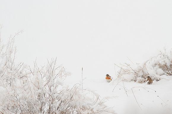 Kışın renkleri -2
