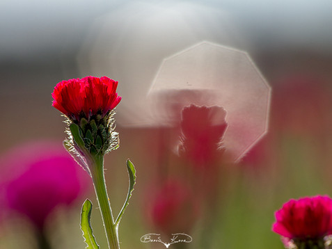 Sevgi çiçeği - 2020
