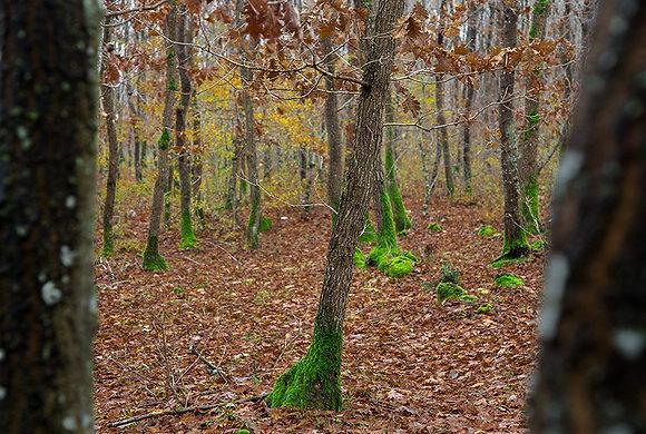 Ormanda geç sonbahar manzarası