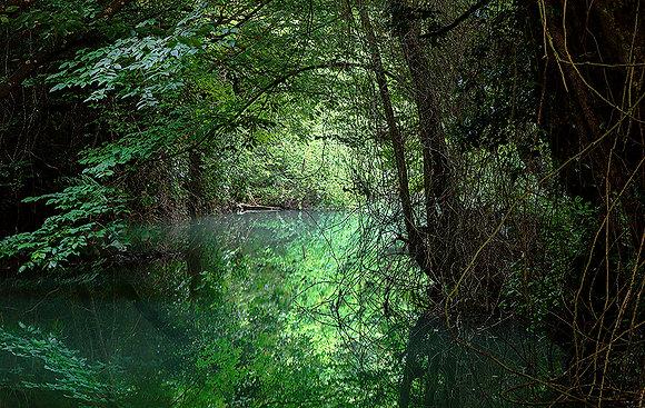 Ormandaki gizli geçit