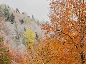 Özel bir orman özel bir sonbahar
