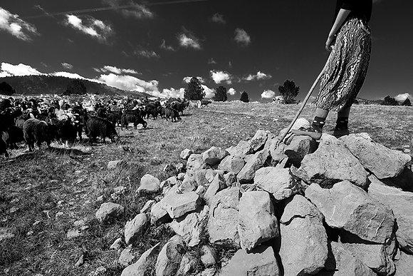 Keçileri yönetmek