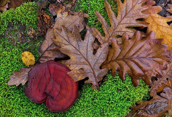 Orman tabanındaki etkileşimler