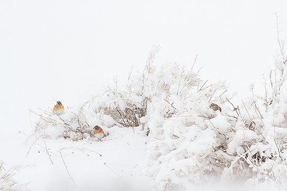 Kışın renkleri -1