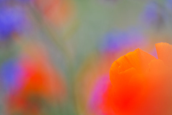 Renk tarlası