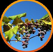 Discover Malibu Vineyards