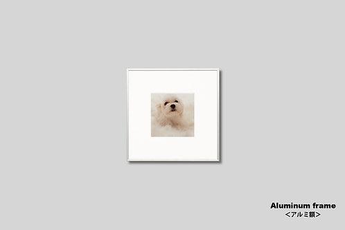 マルチーズ,インテリア,写真,動物,犬,子犬,ペット,かわいい,インテリアフォト,正方形,アート,額入り,額装,オリジナルプリント,アートフレーム,フォトフレーム,壁掛け,壁飾り,装飾