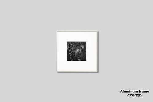 写真,インテリア,木,モノクロ,正方形,インテリアフォト,アート,額入り,額装,オリジナルプリント,アートフレーム,フォトフレーム,おしゃれ,モダン,壁掛け,壁飾り,装飾,部屋飾り,アートポスター,ギフト
