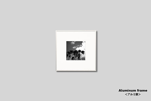 ヤシの木,写真,インテリア,風景,自然,空,インテリアフォト,モノクロ,正方形,額入り,トロピカル,南国,アート,オリジナルプリント,アートフレーム,フォトフレーム,おしゃれ,モダン,壁掛け,壁飾り,額装,装飾,部屋飾り,アートポスター,ギフト