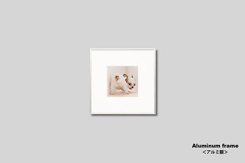 インテリア,写真,動物,犬,仔犬,チワワ,かわいい,インテリアフォト,アート,正方形,額入り,額装,オリジナルプリント,アートフレーム,フォトフレーム,壁掛け,壁飾り,装飾,ウォールアート
