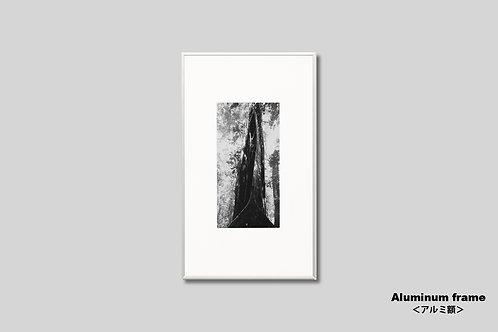 写真,インテリア,風景,木,自然,インテリアフォト,アート,額入り,額装,モノクロ,オリジナルプリント,アートフレーム,フォトフレーム,おしゃれ,モダン,壁掛け,壁飾り,装飾,部屋飾り,アートポスター,ギフト