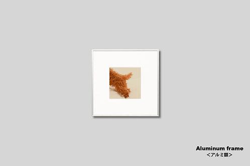 写真,動物,犬,子犬,トイプードル,かわいい,インテリアフォト,アート,正方形,額入り,額装,オリジナルプリント,アートフレーム,フォトフレーム,壁掛け,壁飾り,装飾,ウォールアート
