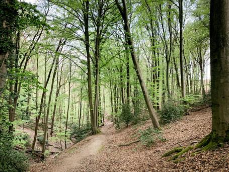 Modernes Gesundheitsmanagement: Die perfekte Work-Wald-Balance